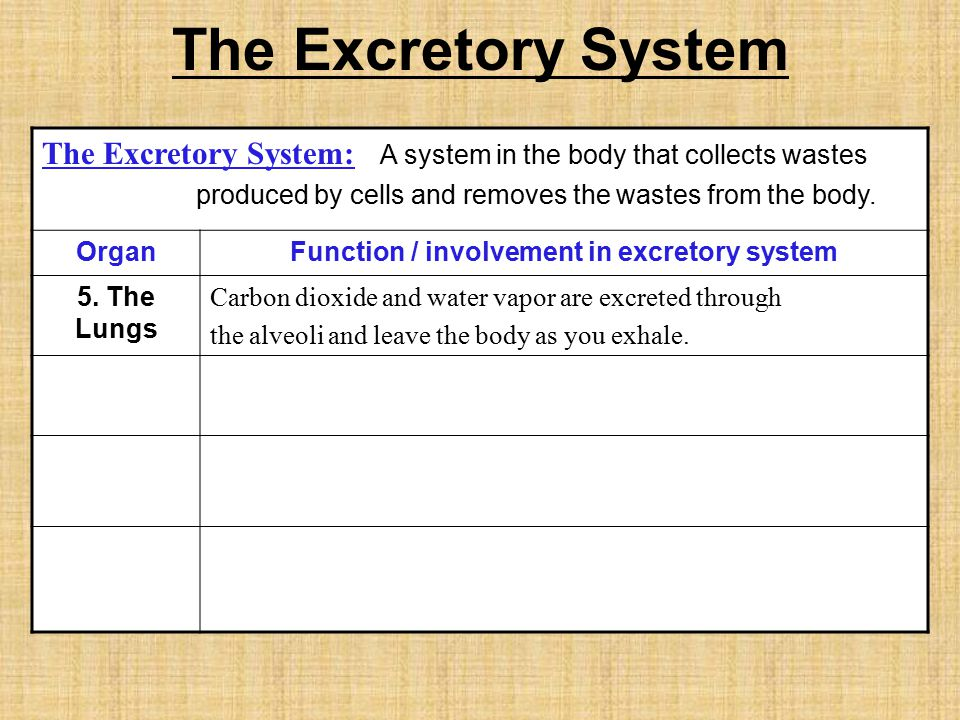Function / involvement in excretory system
