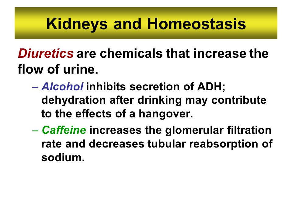 Kidneys and Homeostasis
