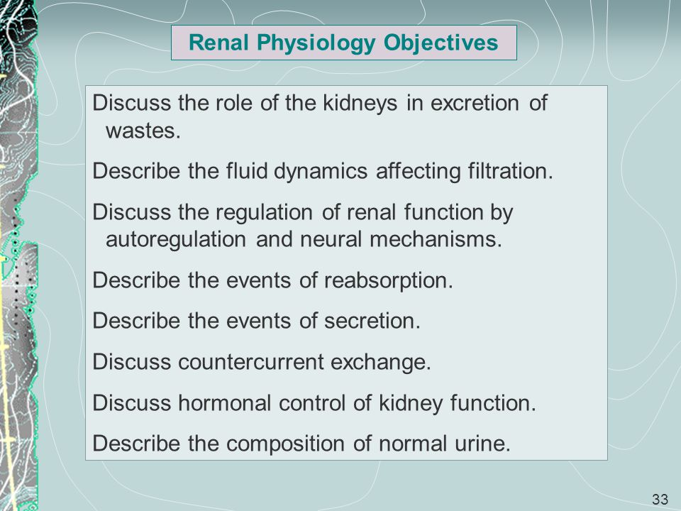 Renal Physiology Objectives