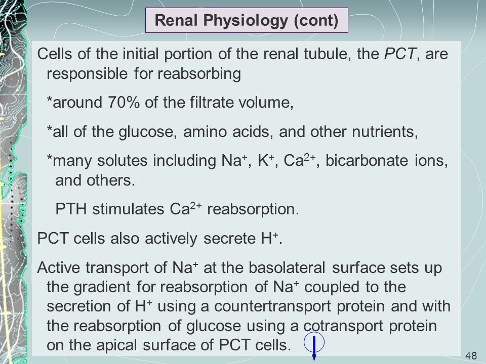 Renal Physiology (cont)