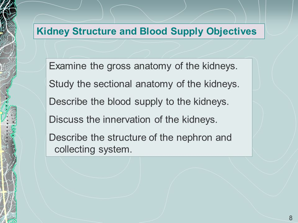 Kidney Structure and Blood Supply Objectives