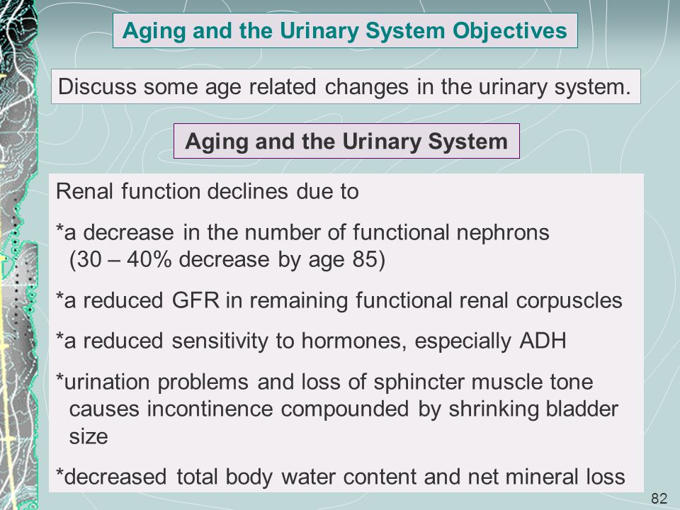 Aging and the Urinary System Objectives Aging and the Urinary System