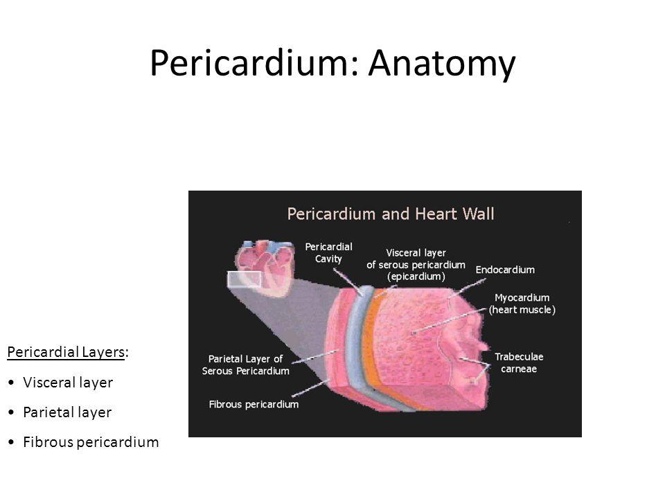 Pericardium: Anatomy Pericardial Layers: Visceral layer Parietal layer