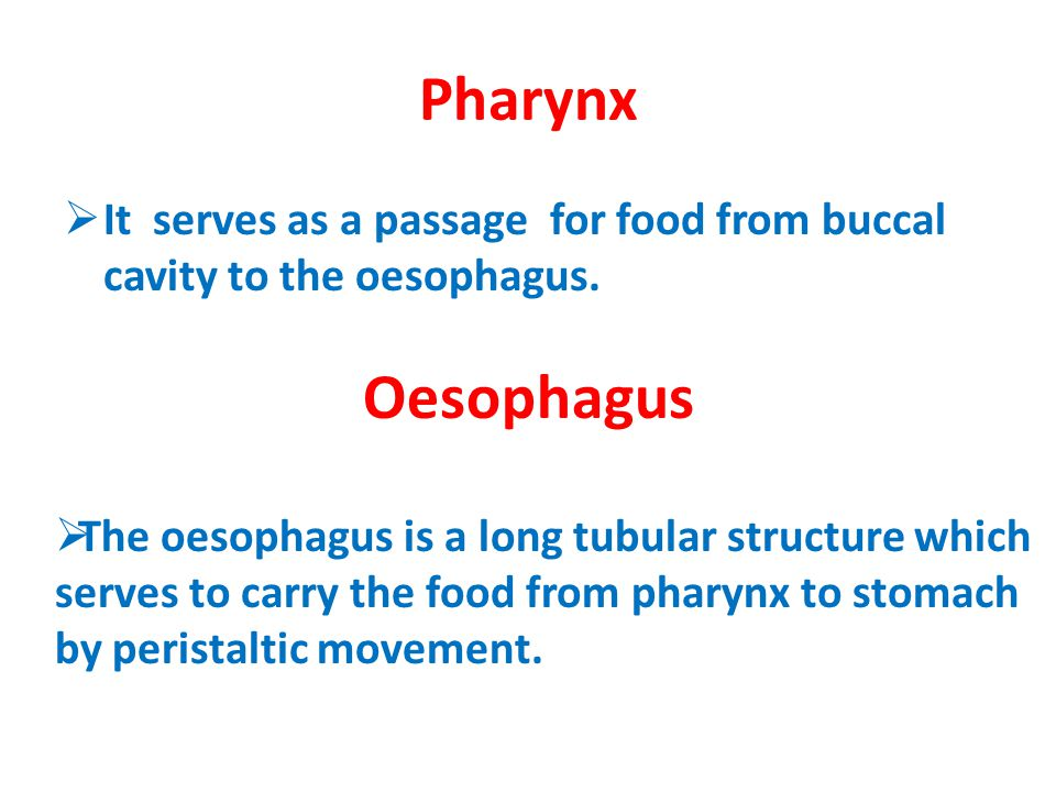 Pharynx It serves as a passage for food from buccal cavity to the oesophagus. Oesophagus.