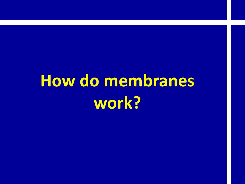 How do membranes work