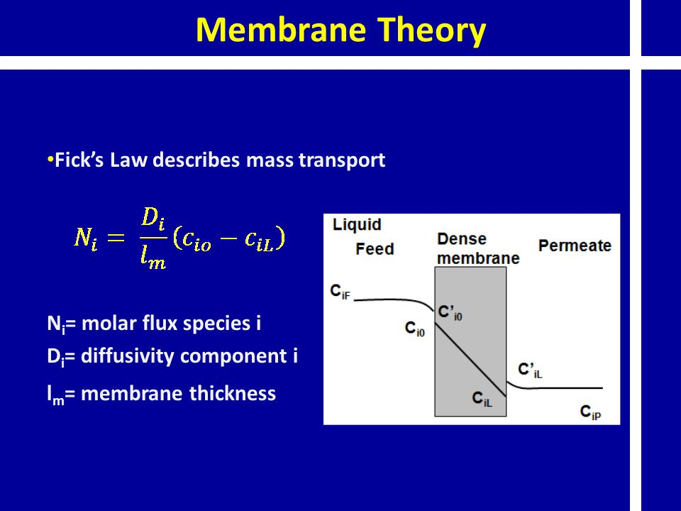 Membrane Theory Fick's Law describes mass transport