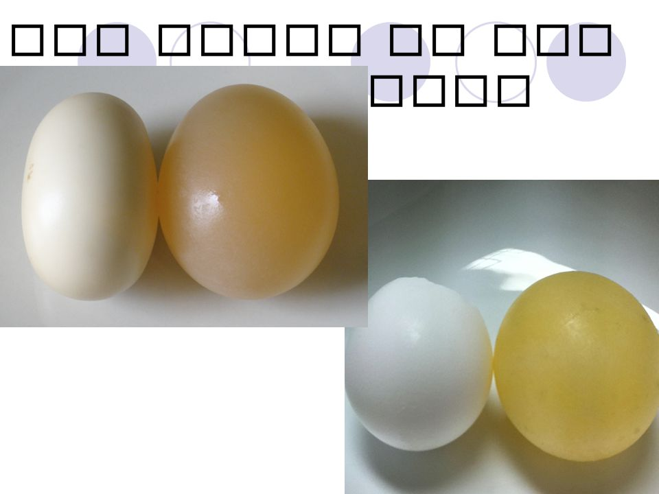 EGG prior to and after vinegar