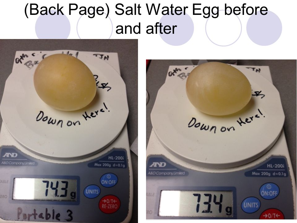 (Back Page) Salt Water Egg before and after