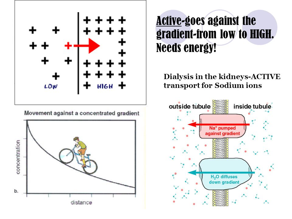 Active-goes against the gradient-from low to HIGH. Needs energy!