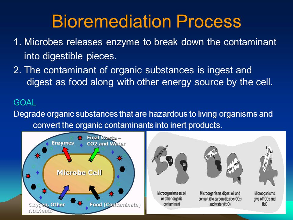 Bioremediation Process
