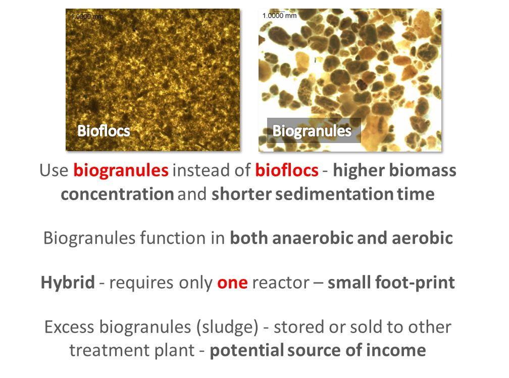 Biogranules function in both anaerobic and aerobic