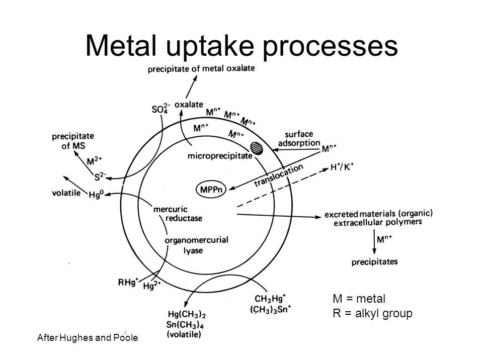 Metal uptake processes