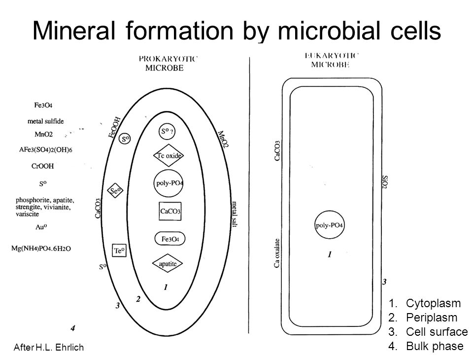 Mineral formation by microbial cells
