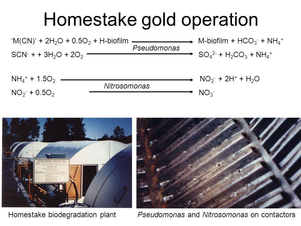 Homestake gold operation