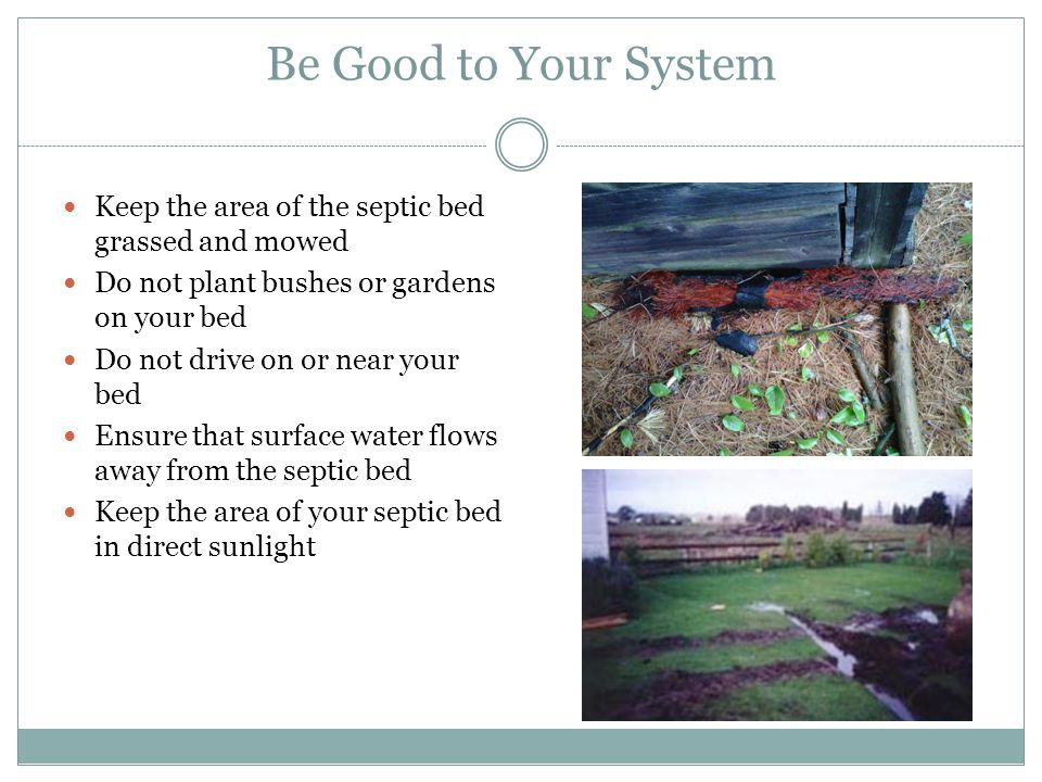 Be Good to Your System Keep the area of the septic bed grassed and mowed. Do not plant bushes or gardens on your bed.