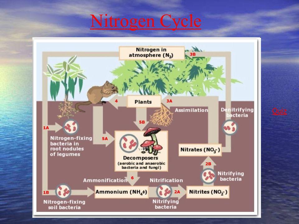 Nitrogen Cycle Quiz Nitrogen Cycle
