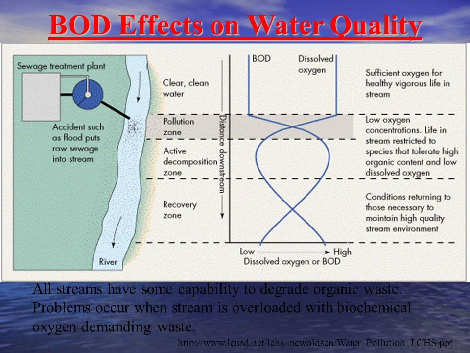 BOD Effects on Water Quality