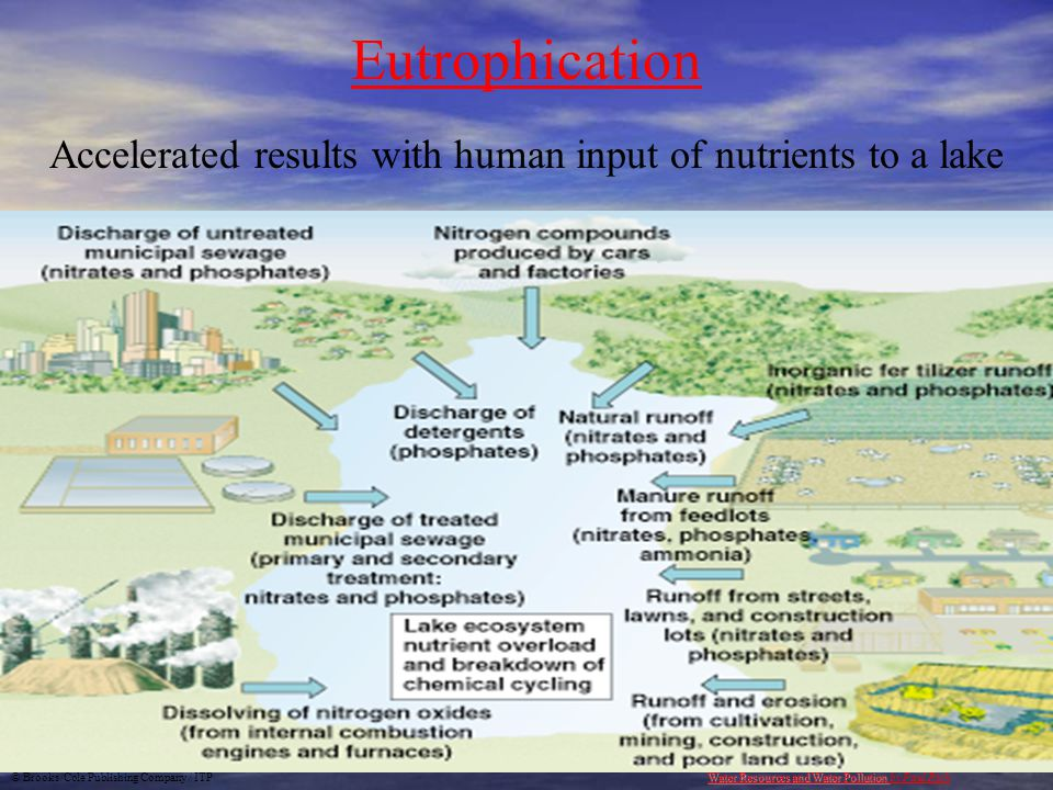 Accelerated results with human input of nutrients to a lake