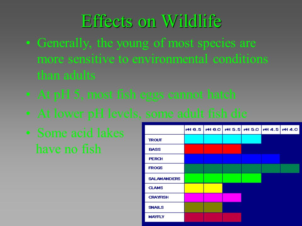 Effects on Wildlife Generally, the young of most species are more sensitive to environmental conditions than adults.