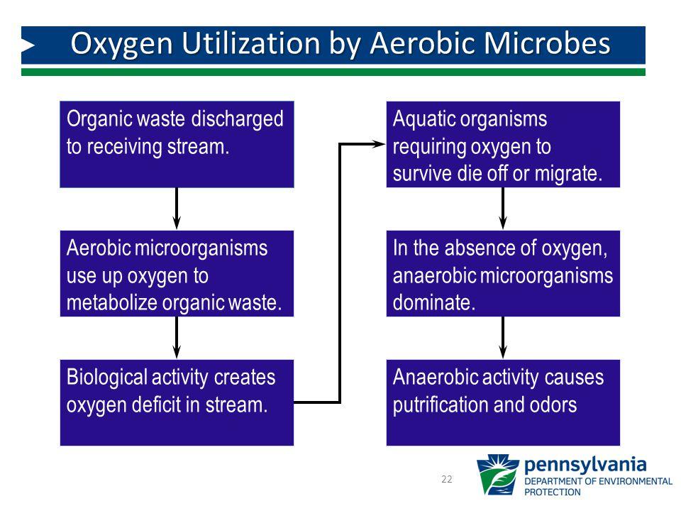 Oxygen Utilization by Aerobic Microbes