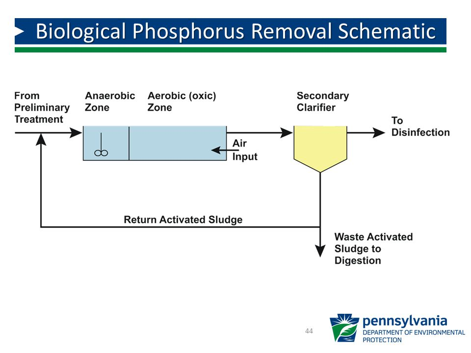 Biological Phosphorus Removal Schematic
