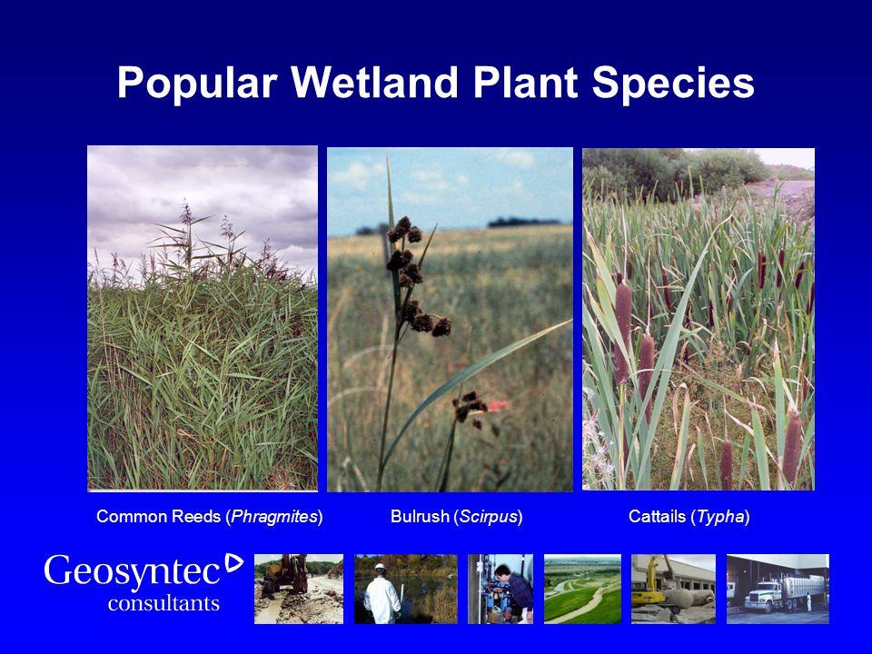Popular Wetland Plant Species