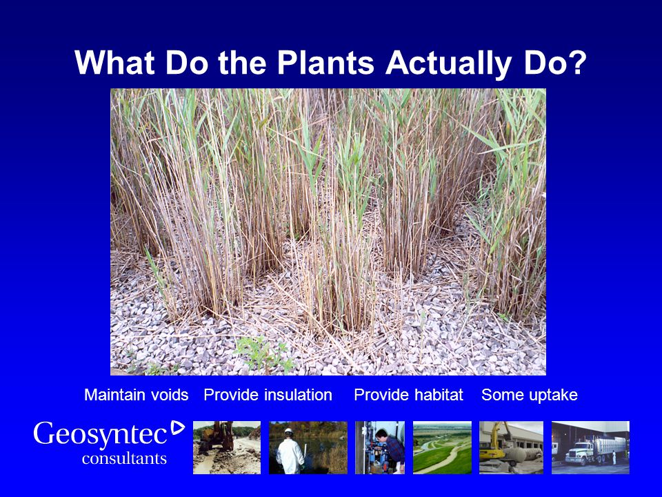 What Do the Plants Actually Do