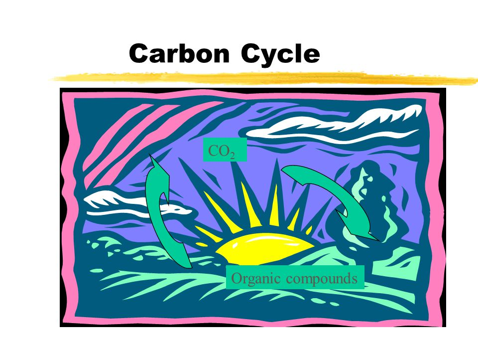 Carbon Cycle CO2 Organic compounds
