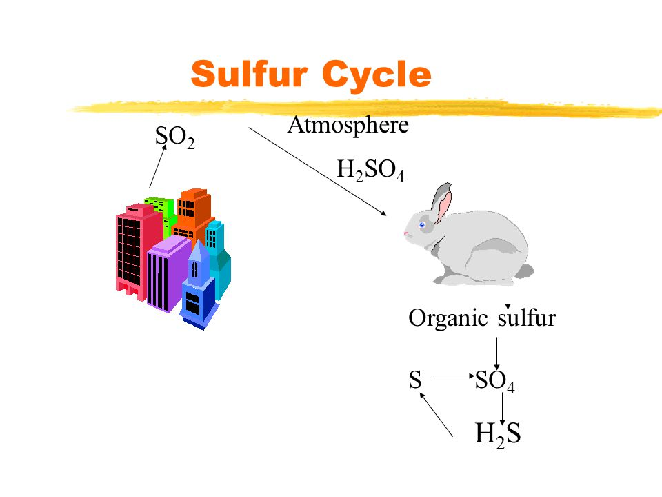 Sulfur Cycle Atmosphere SO2 H2SO4 Organic sulfur S SO4 H2S