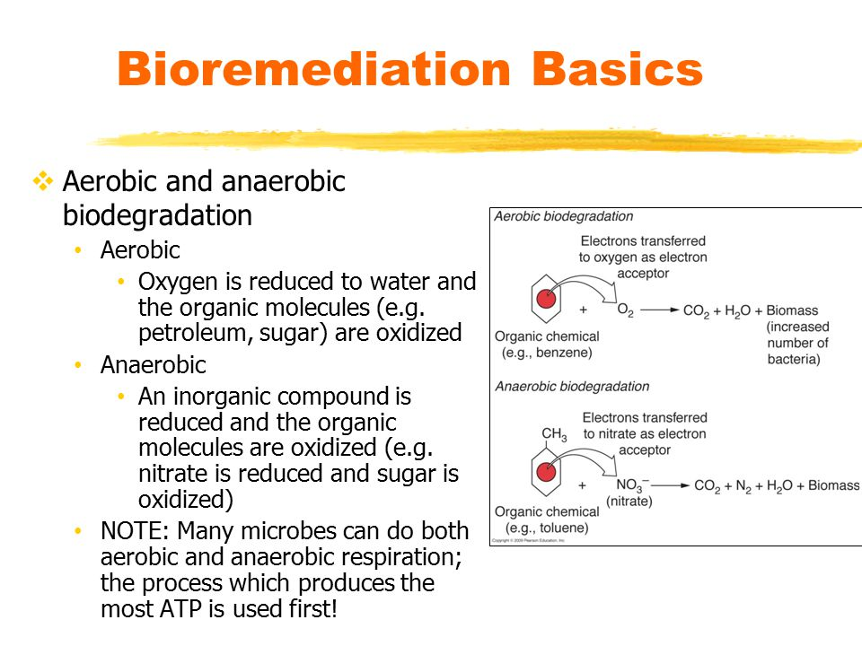 Bioremediation Basics