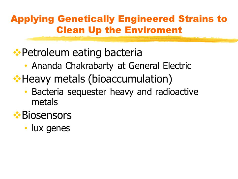 Applying Genetically Engineered Strains to Clean Up the Enviroment