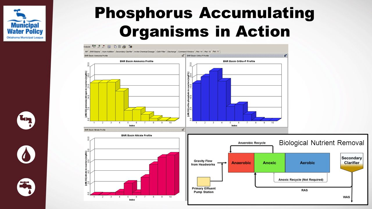Phosphorus Accumulating Organisms in Action