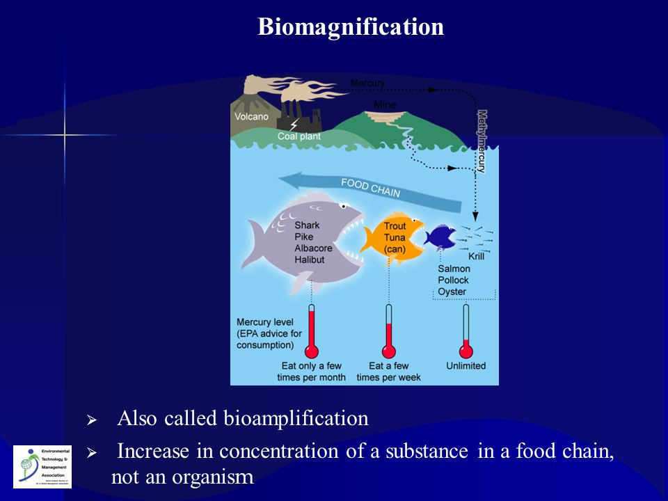 Biomagnification Also called bioamplification