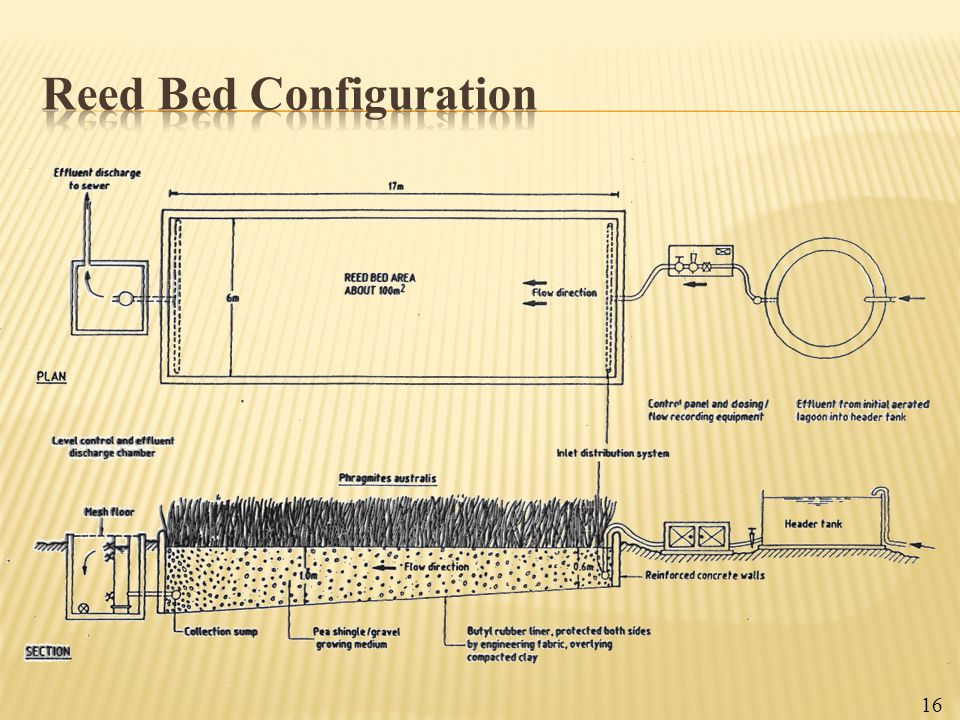 Reed Bed Configuration