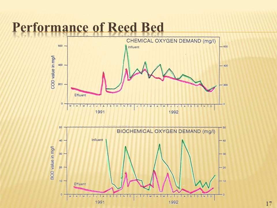 Performance of Reed Bed