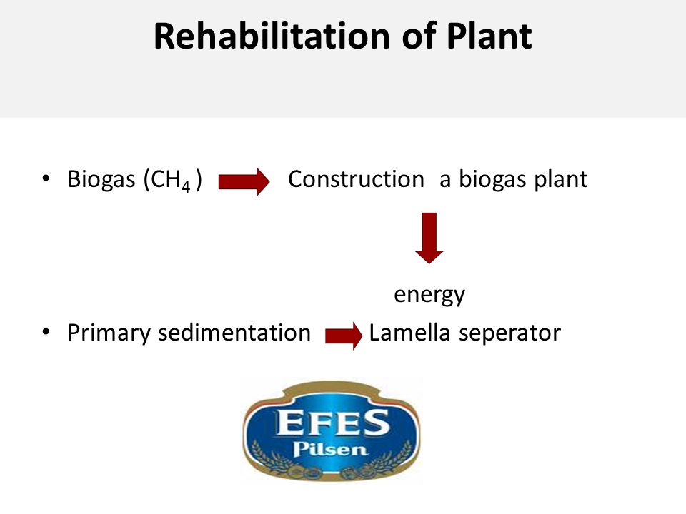 Rehabilitation of Plant