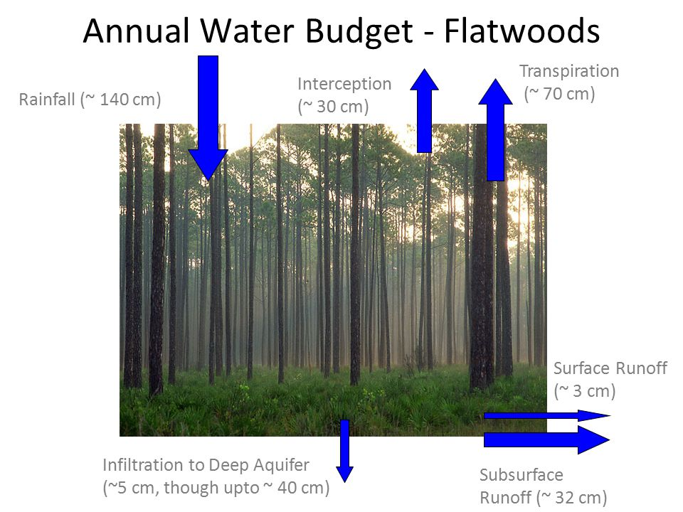 Annual Water Budget - Flatwoods