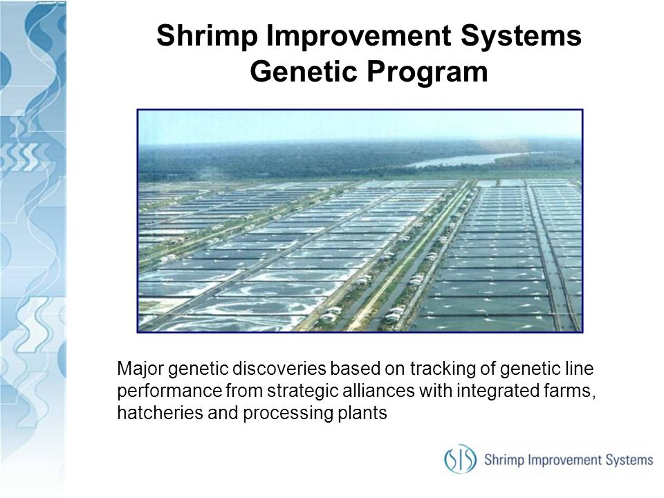 Shrimp Improvement Systems Genetic Program