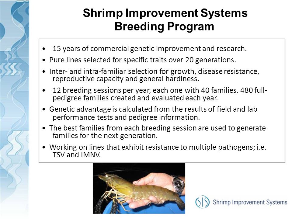 Shrimp Improvement Systems Breeding Program