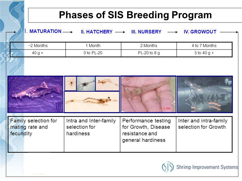 Phases of SIS Breeding Program