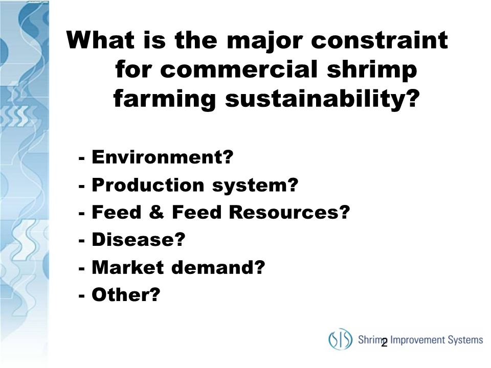 What is the major constraint for commercial shrimp