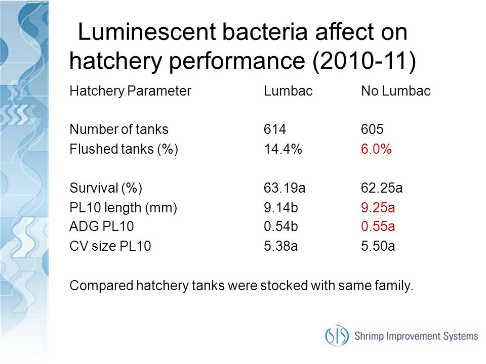 Luminescent bacteria affect on hatchery performance (2010-11)