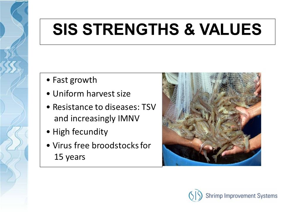 SIS STRENGTHS & VALUES • Fast growth • Uniform harvest size
