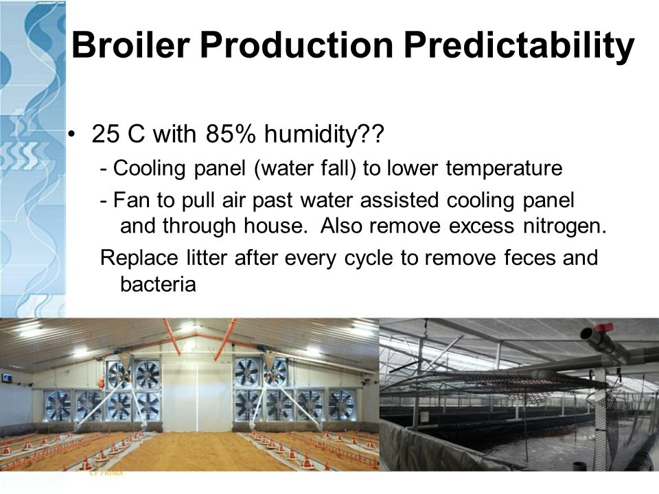 Broiler Production Predictability