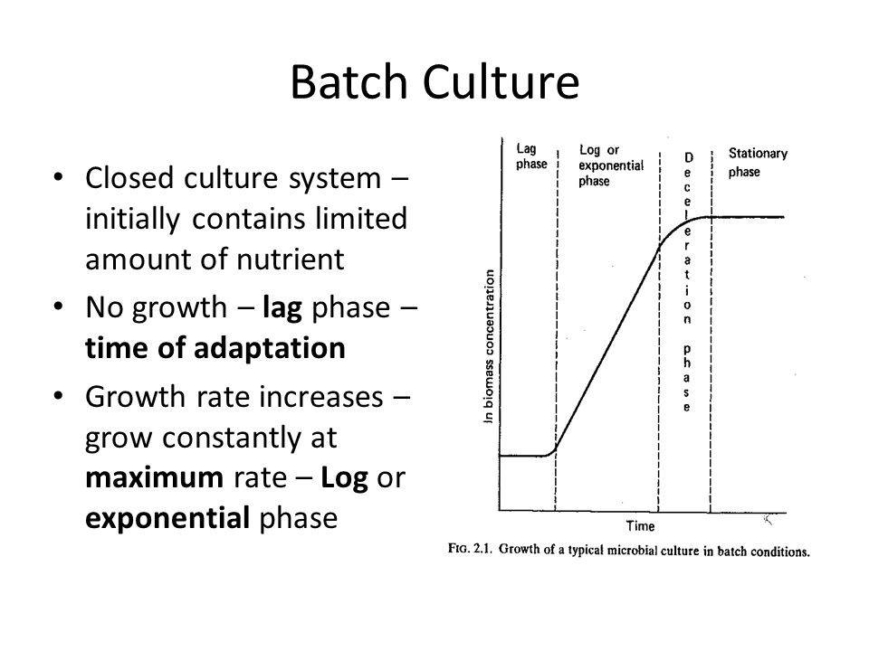 Batch Culture Closed culture system – initially contains limited amount of nutrient. No growth – lag phase – time of adaptation.