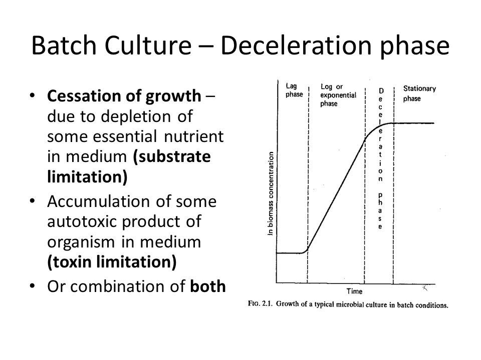 Batch Culture – Deceleration phase