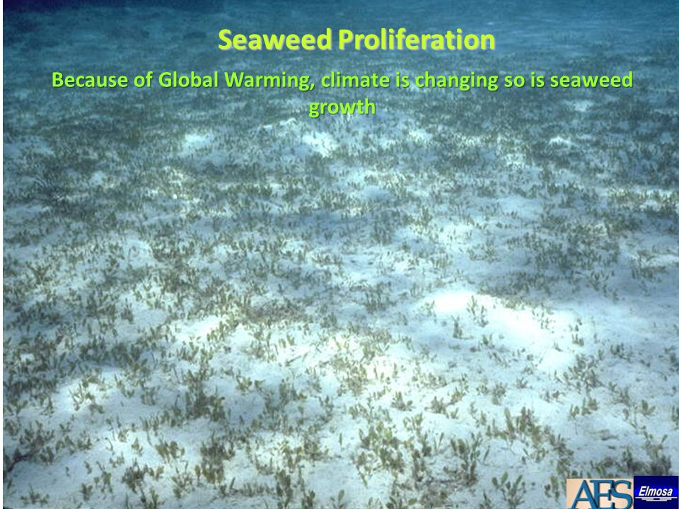 Seaweed Proliferation