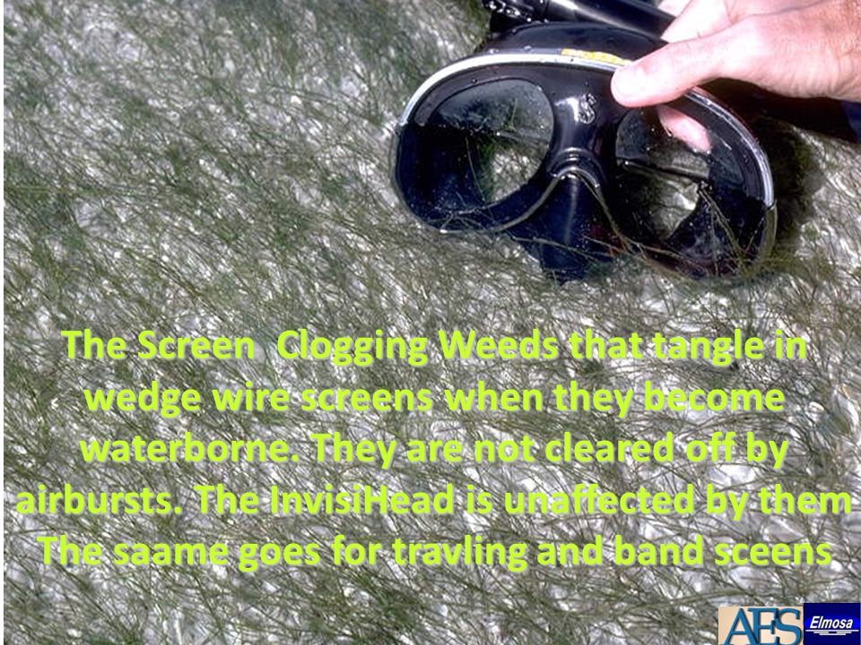 The Screen Clogging Weeds that tangle in wedge wire screens when they become waterborne.