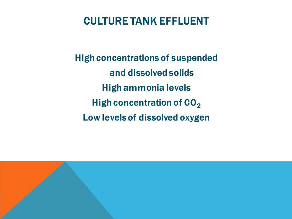Culture Tank Effluent