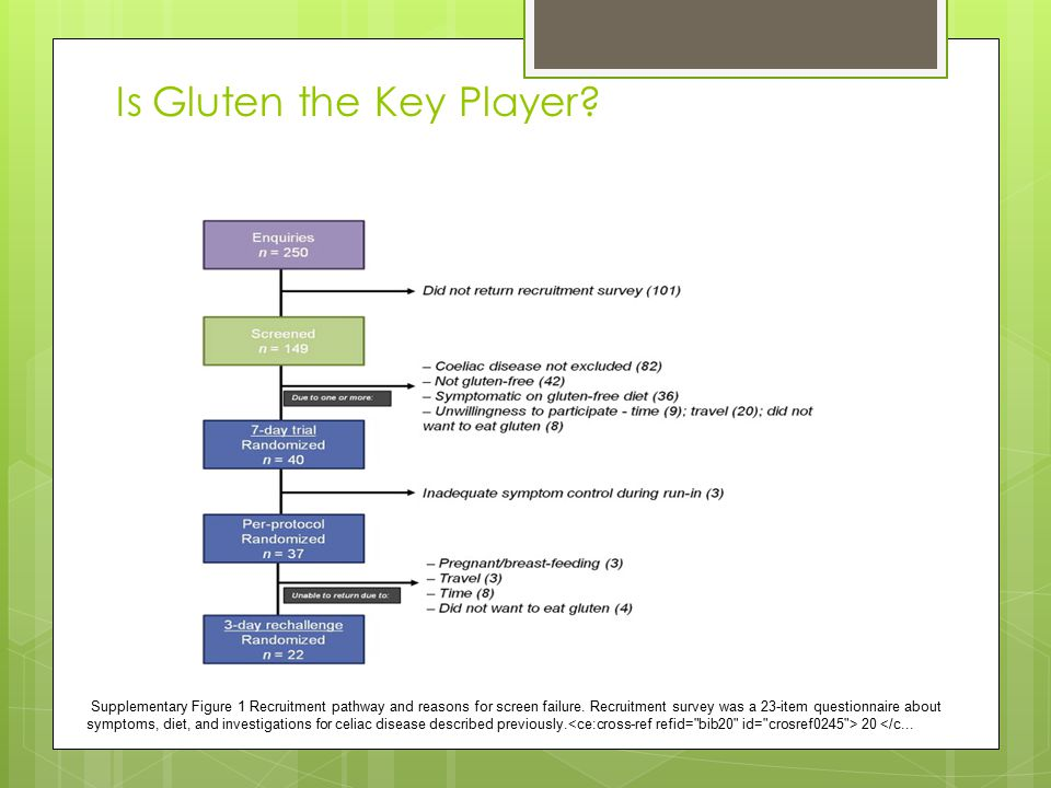 Is Gluten the Key Player